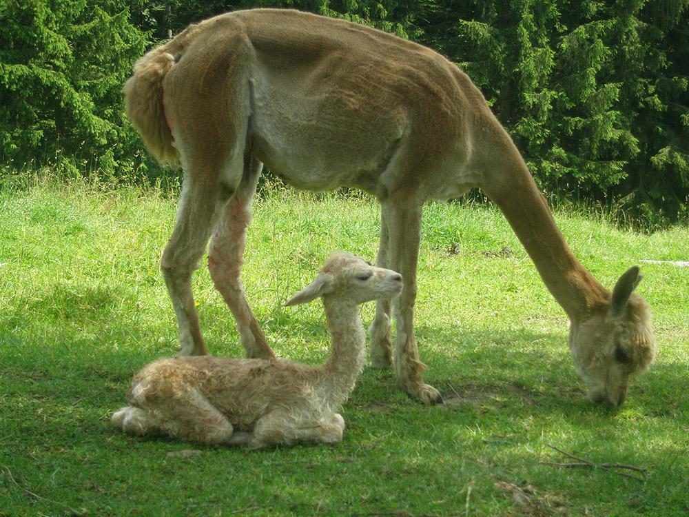 Alle tiere werden regelmäßig geimpft und entwurmt jedes tier ist in